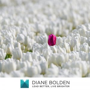 a bright pink tulip standing out from a field of only white tulips transcending tradition