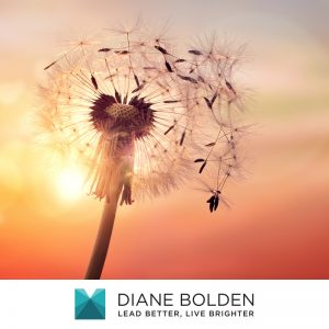 dandelion withstanding the elements outside representing a bulletproof image